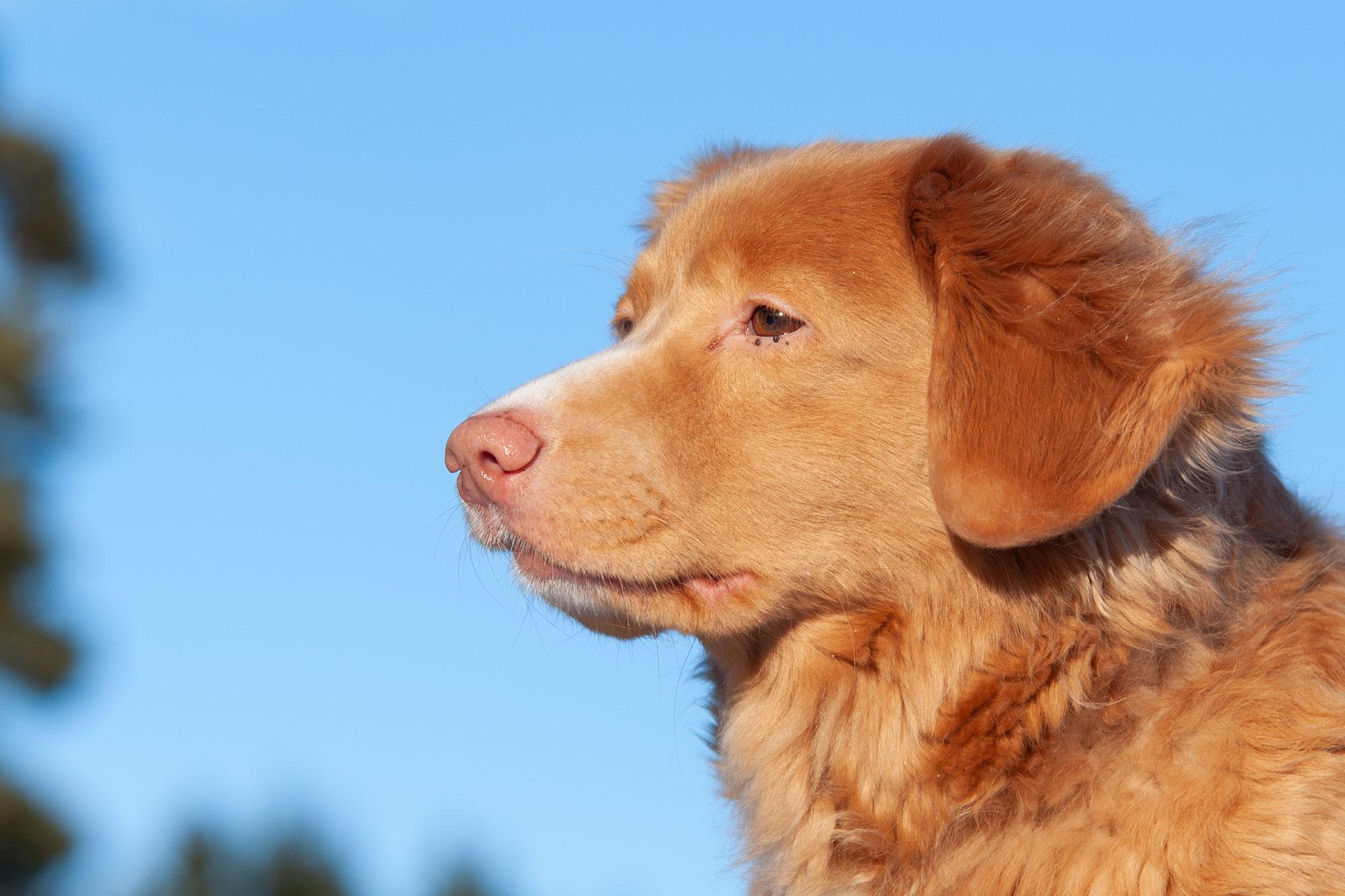 Nya Djurskyddsföreskrifter är På Gång