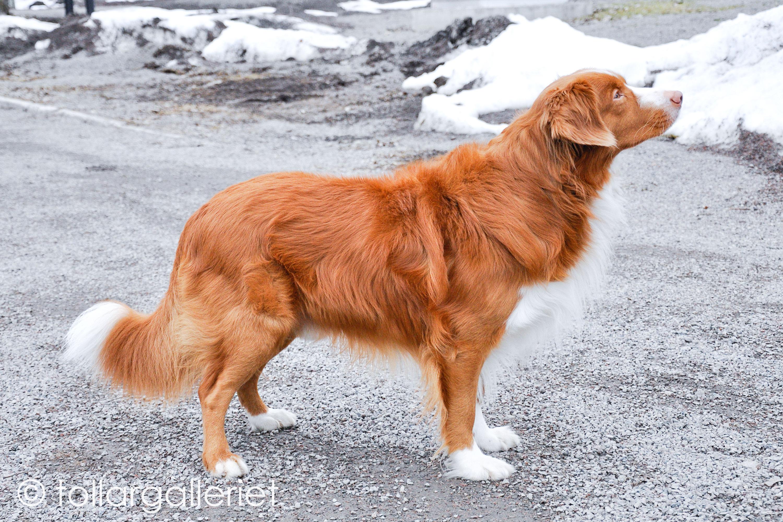 Hundskallet's Ivar Af Zack