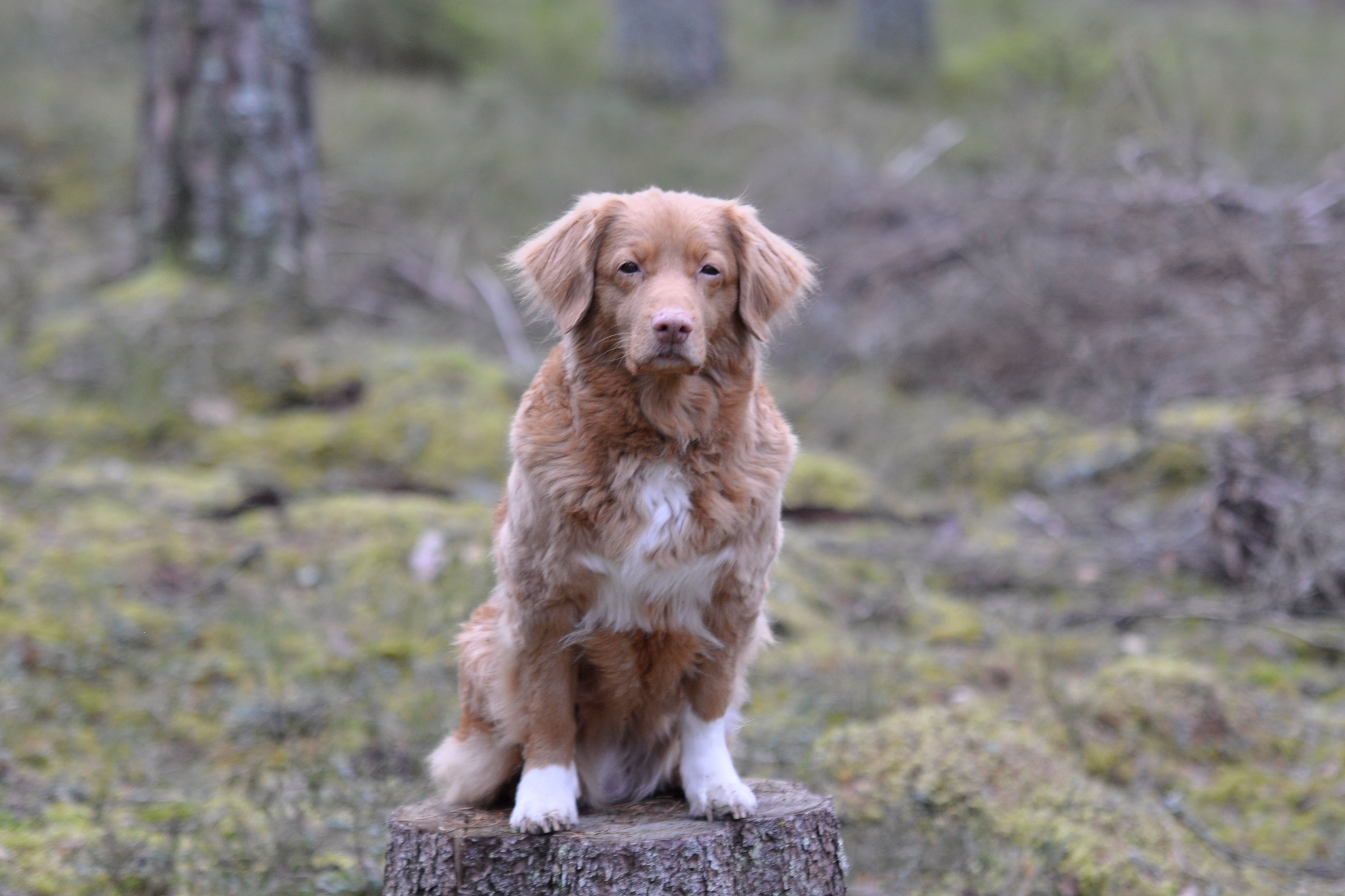 Hundprylar På önskelistan